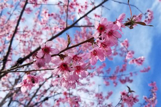 花城攀枝花温暖如春 感受与众不同的冬天