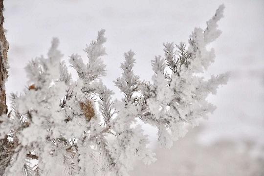 甘肃敦煌雪后初现雪凇景观
