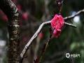 时下春意正浓,繁花争奇斗艳,如跳动的音符,弹奏着春天的活力,绽放出一个万紫千红的世界。图片为3月19日拍摄于四川南充的郊外公园。(图/毛明禄 刘萍  文/张晓沫)