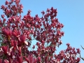 """3月19日,贵州省贵阳市碧空万里,筑城广场和河滨公园已是""""百花争艳满堂春"""",阳光下姹紫嫣红煞是好看。(韦方龙/摄)"""