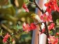 百花争艳筑城秀 万紫千红总是春