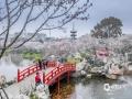 3月中旬武汉天气迅速回暖,樱园里的万株樱花树相继绽放,形成一片粉红色的海洋,蔚为壮观。(拍摄:李必春)