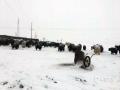 受冷空气影响,青海部分地区昨(21日)现降雪天气,其中黄南、果洛和海北的部分地区降雪量较大。降水中心出现在海北州门源县,降水量达到6.9毫米、积雪深度7厘米。受此影响,部分路段出现积雪、结冰现象,导致车辆出行存在较大的安全隐患。城镇外的草场也被积雪覆盖,让牛羊无法正常采食。(文/图 宋维嘉 徐强  袁志强)