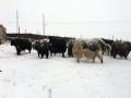 青海降雪又至  交通畜牧受影响