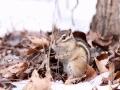 吉林雪后寒凉依旧 小动物们齐盼春