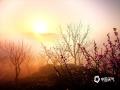 3月23日安徽歙县杞梓里镇坡山村油菜花节开幕,吸引了众多游客和摄影爱好者纷至沓来。26日早晨当地出现了云海美丽景观,宛若仙境。(拍摄/方文辉)