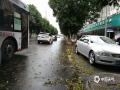 暴雨过后街道铺满落叶。(摄/孙活坤)
