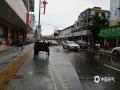 廉江遭受短时暴雨,城乡积涝严重。(摄/孙活坤)