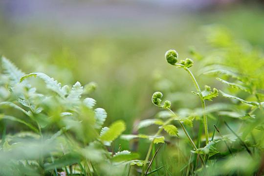 春满四月 贵州黎平草木葱茏