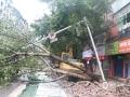 9日凌晨2时开始,广安自西向东出现了一次强对流天气,大部地方出现了雷雨大风,部分地方出现了7级以上大风,最大风速出现在岳池黄龙28.4米/秒。大风导致广安城区街道一片狼藉。图为被大树压倒的红绿灯。(图/文 董雪梅)