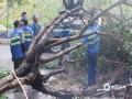 图为园林工人在处理风灾现场。