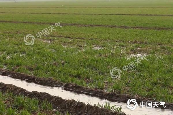 河北冬小麥迎喜雨 升溫開啟助生長