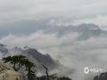 4月10日,经历了一场大雨的洗礼后华山出现了美丽的云海。云海以它变幻万千的身影赋予这座名山以神奇的色彩,更显震撼壮观。(吕妍/图文)