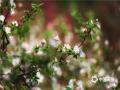 北京阳光和煦,春意浓浓,植物园里的各色花卉竞相绽放,迎接春天的到来。图片拍摄于4月10日(摄影/郑睿 配文/柚柚)