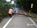工作人员正在全力清理倒下的树木。(摄影:张树龙)