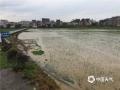 强降水导致镇隆镇六厚村农田受淹。(摄影:梁家明)