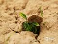 泥土中埋藏着生命的种子,这就是春天的力量。(图:杨婧  文:马蕾)