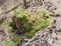 泥土中埋藏着生命的种子,这就是春天的力量(图:杨婧  文:马蕾)