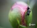 春到人间草木知,大地处处春意盎然,且看微距下春花别具趣味。图片摄于4月15日贵州省大方县黄泥塘镇背座村路边。(罗大富/摄)