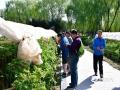 最美人间四月天,一年一度的中国洛阳牡丹文化节正在举行,雍容华贵的牡丹竞相绽放,花繁叶茂,洛阳城人潮涌动,竞睹牡丹倩姿芳容。(文/刘玉珠 李文浩   摄影/张建武)