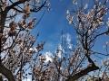 春临高原 蔚蓝之下百花齐放