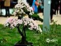 展出的杜鹃花种类有:高山杜鹃、映山红、春鹃、夏鹃、西洋鹃、石岩杜鹃花、金达莱等二百多个。图为4月21日第十六届中国杜鹃花展览。(图/文 崔广暑 王连珍)