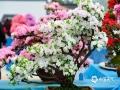 整个花展将持续一个月,分为花卉周、亲子周、活力周、浪漫周。(图/文 崔广暑 王连珍)
