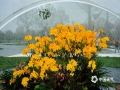 图为4月21日第十六届中国杜鹃花展览。(图/文 崔广暑 王连珍)