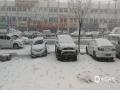 在冷空气和人工增雪的共同作用下,今天(24日)早晨开始,河北承德围场县出现降雪天气,其中县城及围场坝上地区降雪十分明显,大片的雪花飘落,地面很快就被积雪覆盖,当地的世界杯手机投注网站也降至0℃。此次降雪虽然给公众交通出行带来一定的影响,但在降低森林火险,增加土壤墒情,缓解春季旱情方面起到了极大的作用。(图/朱国良 宋春来 冯亮)