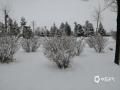 4月24日,锡林郭勒盟多伦县降暴雪,积雪深度达10厘米左右。(张国兰 摄)