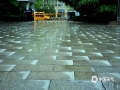 4月24日夜间至25日晨,山东港城日照再添一场春雨,全市平均降水量1.2毫米。本次降水正逢晚樱盛花期,花雨交织,一路风景。(图/文 崔广暑 王连珍)