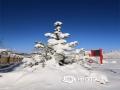 中国天气网讯 4月24日,河北出现全省性降水天气,北部承德坝上的丰宁、围场等地出现降雪。在丰宁满族自治县,降雪从24日开始持续到25日凌晨,气象部门的观测数据显示,当地降水量为26.9毫米,积雪深度普遍在10厘米以上。由于雪后降温,今早气温低,降雪未能快速融化,多个路段还出现了道路结冰,给交通出行带来了不小的影响,在国家一号风景大道大滩到御道口段,就因道路积雪、湿滑原因,造成了交通拥堵。(摄影/王云峰)