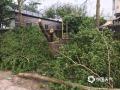 中国天气网讯 受强雷雨云团影响,25日夜间清远市英德市石牯塘镇出现1小时55毫米的短时强降水、8级短时雷雨大风、局地冰雹等强对流天气。目前,当地正在开展清理工作,具体灾情正在了解中。(文/陆德辉,图/英德市石牯塘三防办)