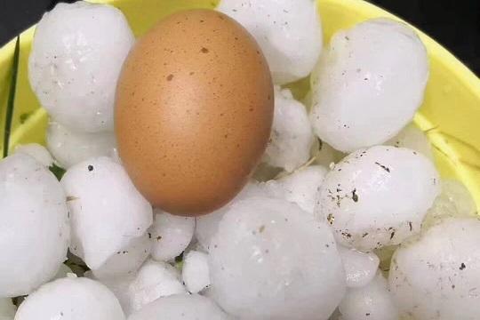 甘肃靖远现鸡蛋大冰雹 农作物受灾严重
