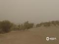 今天(11日),内蒙古额济纳旗持续大风沙尘天气,当地胡杨林陷入在风沙中。(郭敏 摄)