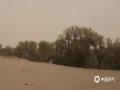 春天,额济纳旗遭遇风沙肆虐时,坚强的胡杨树在大漠中屹立挺拔。(郭敏 摄)