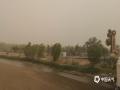 """5月11日,弱水河畔的额济纳旗胡杨林被风沙""""吞噬""""。(郭敏 摄)"""