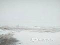 中国天气网讯 5月11日至13日,内蒙古巴彦淖尔市乌拉特后旗遭遇雷阵雨、大风、沙尘暴、大雪、霜冻五种极端天气过程,牧民的棚圈、房屋等设施出现不同程度的损坏,农作物受灾严重。(文:王媛媛  图:牧民)