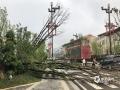 中国天气网讯 5月15日夜间到16日凌晨,贵州省长顺县普降暴雨,最大雨量发生长顺县城,为92.3毫米,同时伴有8级大风,导致该县长威大道两旁树木和路灯出现不同程度断裂或倒塌,部分路段出现积水。截至16日早晨8时30分,全城仍处于停电状态。图为树木被连根拔起。(苟小雪/摄)