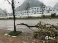 中国天气网讯 5月15日夜间到16日凌晨,贵州省长顺县普降暴雨,最大雨量发生长顺县城,为92.3毫米,同时伴有8级大风,导致该县长威大道两旁树木和路灯出现不同程度断裂或倒塌,部分路段出现积水。截至16日早晨8时30分,全城仍处于停电状态。图为树木折断。(苟小雪/摄)