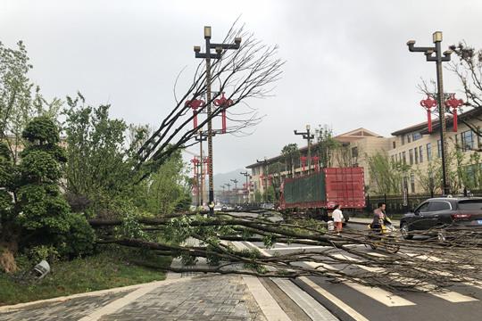 暴雨大风来袭 贵州长顺树木折倒全城停电