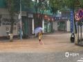 中国天气网讯 今天(19日),福建三明(建宁、泰宁、将乐、宁化、清?#40140;?#26126;溪、沙县)等地持续暴雨,局部大暴雨。本次过程是今年以来最强持续性暴雨过程,具有过程雨量大、范围广、极端性和局地性强等特点。图为泰宁华兴超市门口市民淌水经过。(图/李日豪 文/万灵)