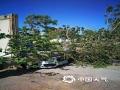 中国天气网讯 19日下午,河北唐山出现9级(21米/秒)大风,导致市区多棵树木被大风吹倒,部分停放车辆被砸。截止目前,唐山的大风天气还在?#20013;?#24403;地气象部门也是提醒市民,大风天气出行及停放车辆,要远离大树、广告?#39057;?#29289;体,以免造成人身伤害和财产损失。图片拍摄于唐山市区。(图/杨妍 刘丽君)