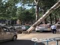 中国天气网讯 19日下午,河北唐山出现9级(21米/秒)大风,导致市区多棵树木被大风吹倒,部分停放车辆被砸。截止目前,唐山的大风天气还在持续,当地气象部门也是提醒市民,大风天气出行及停放车辆,要远离大树、牌等物体,以免造成人身伤害和财产损失。图片拍摄于唐山市区。(图/杨妍 刘丽君)