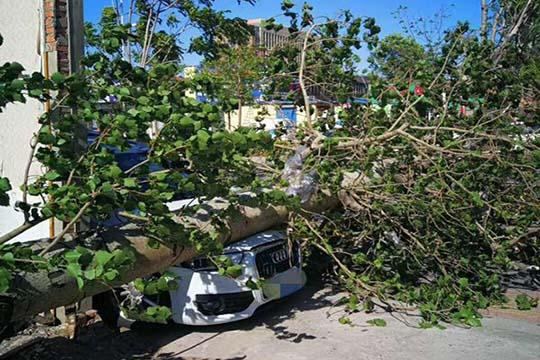 9级大风肆虐河北唐山 吹倒大树多车被砸