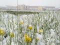 中国天气网讯5月19日开始到20日,四川阿坝州红原县迎来了一场雨雪天气,县城里雪花飞舞,一片白茫茫的大地,让人有置身于冬季的错觉。(图/潘军 文/李颖)
