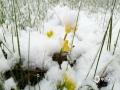 世界杯手机投注平台天气网讯 5月19日开始到20日,四川阿坝州红原县迎来了一场雨雪天气,县城里雪花飞舞,一片白茫茫的大地,让人有置身于冬季的错觉。(图/潘军 文/李颖)
