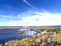 中国天气网讯 五月的若尔盖阴雨连天,近日天空终于放晴,若尔盖花湖也开启了它今年的美丽征程。苇草丰茂,渐渐褪去冬日的枯黄,蓝天白云与湖面相互交映,微风拂过,湖面层层涟漪轻漾,为这静谧更增一分欢愉。(图/文 张雷)