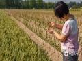 """小满是一个令人激动的节气,因为它给人的希望已经实实在在地呈现在眼前,""""油菜半垂金荚果,大麦垂头小麦黄。""""将满未满之时,更让人满怀憧憬,这才是最美好的时刻。图为农民在田间查看麦情。(图/文 王英 王连珍)"""