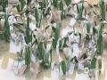 5月25日-27日,广西中北部遭受强降雨袭击。受强降雨影响,柳州、百色、河池、来宾等市多县(区)出现内涝、山洪、山体滑坡等灾害。图为27日,柳州市柳城县玉米地被淹。(图/彭娟 文/韦庆华 苏立明 彭娟 经志梅 刘国平)